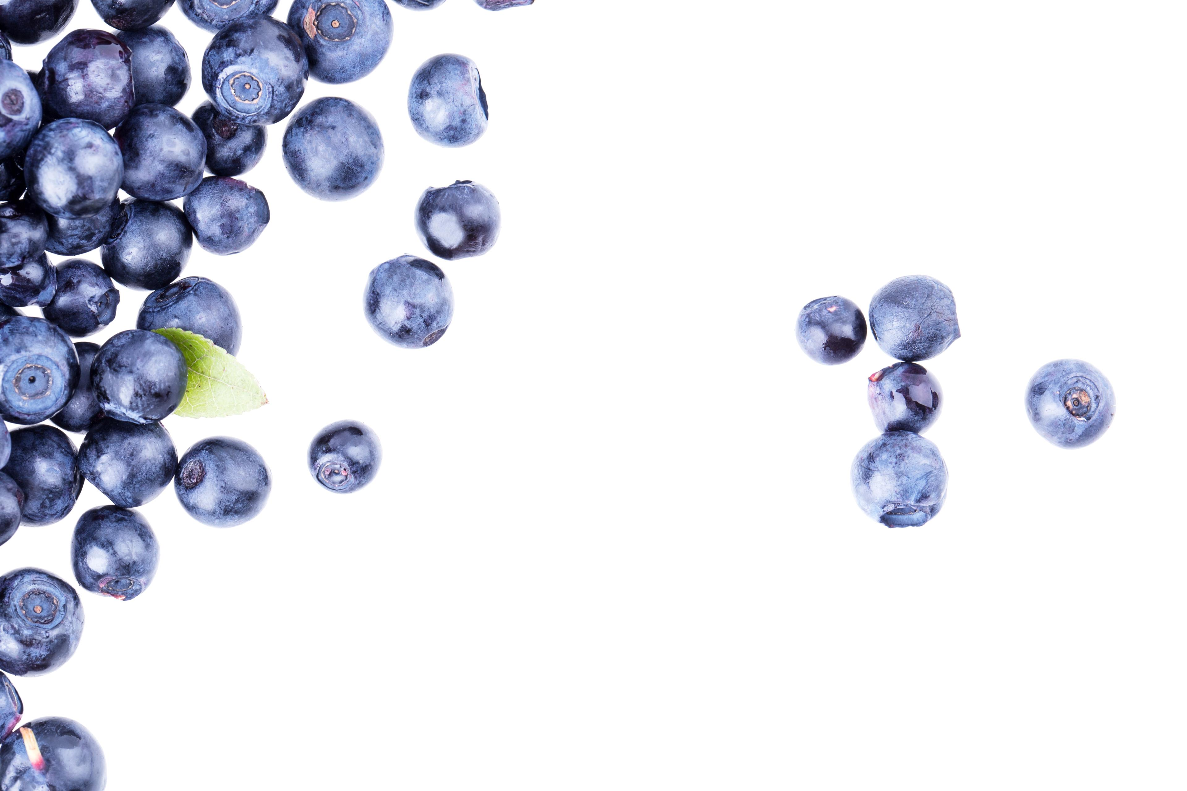 Blueberries against a plain, white background